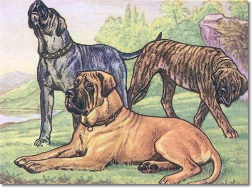 canine-color-plate-from-kamerad-hund-of-mastiff
