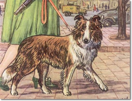 canine-color-plate-from-kamerad-hund-of-sheltie