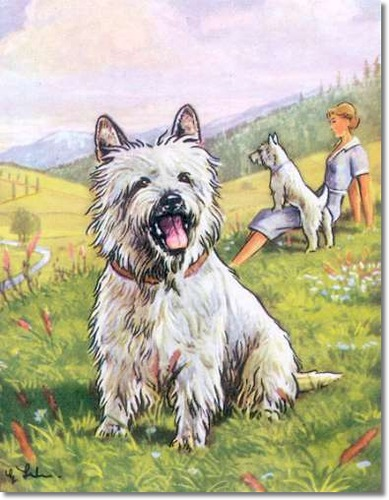 canine-color-plate-from-kamerad-hund-of-west-highland-white-terrier