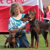 Multatuli Empress Gold, Tsara Bella & Dobermanns